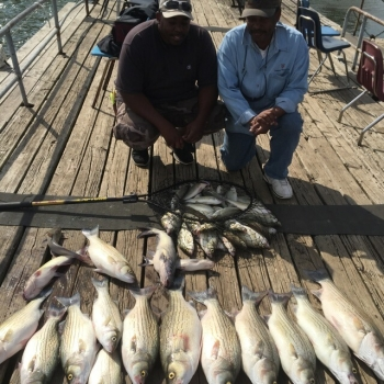 Big Hybrids Photo at Lewisville Fishing Barge