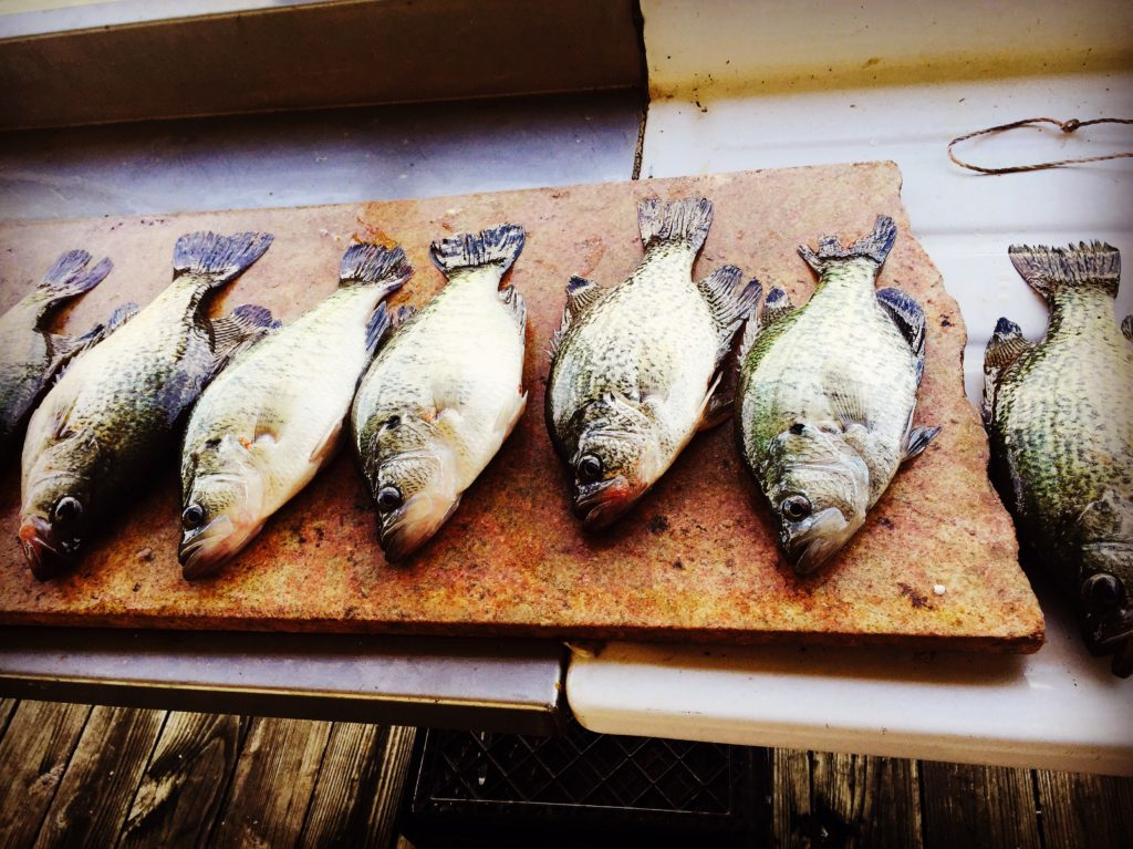 Lake Lewisville Crappie Guided Fishing Trip