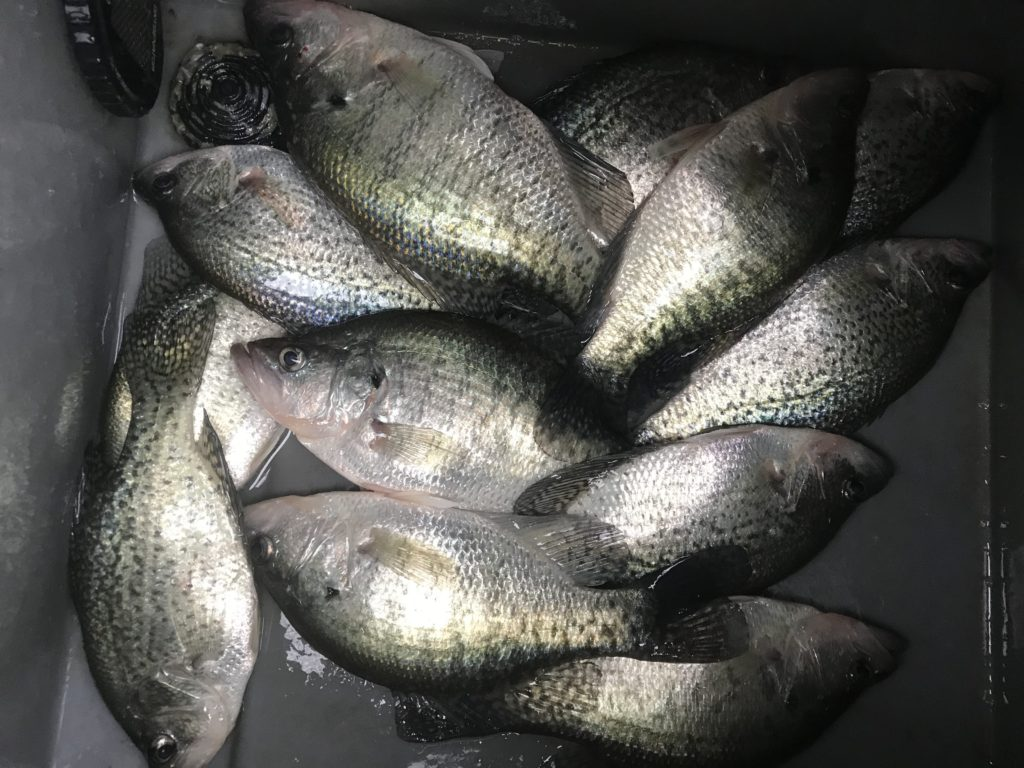 Crappie Texas Fishing Report