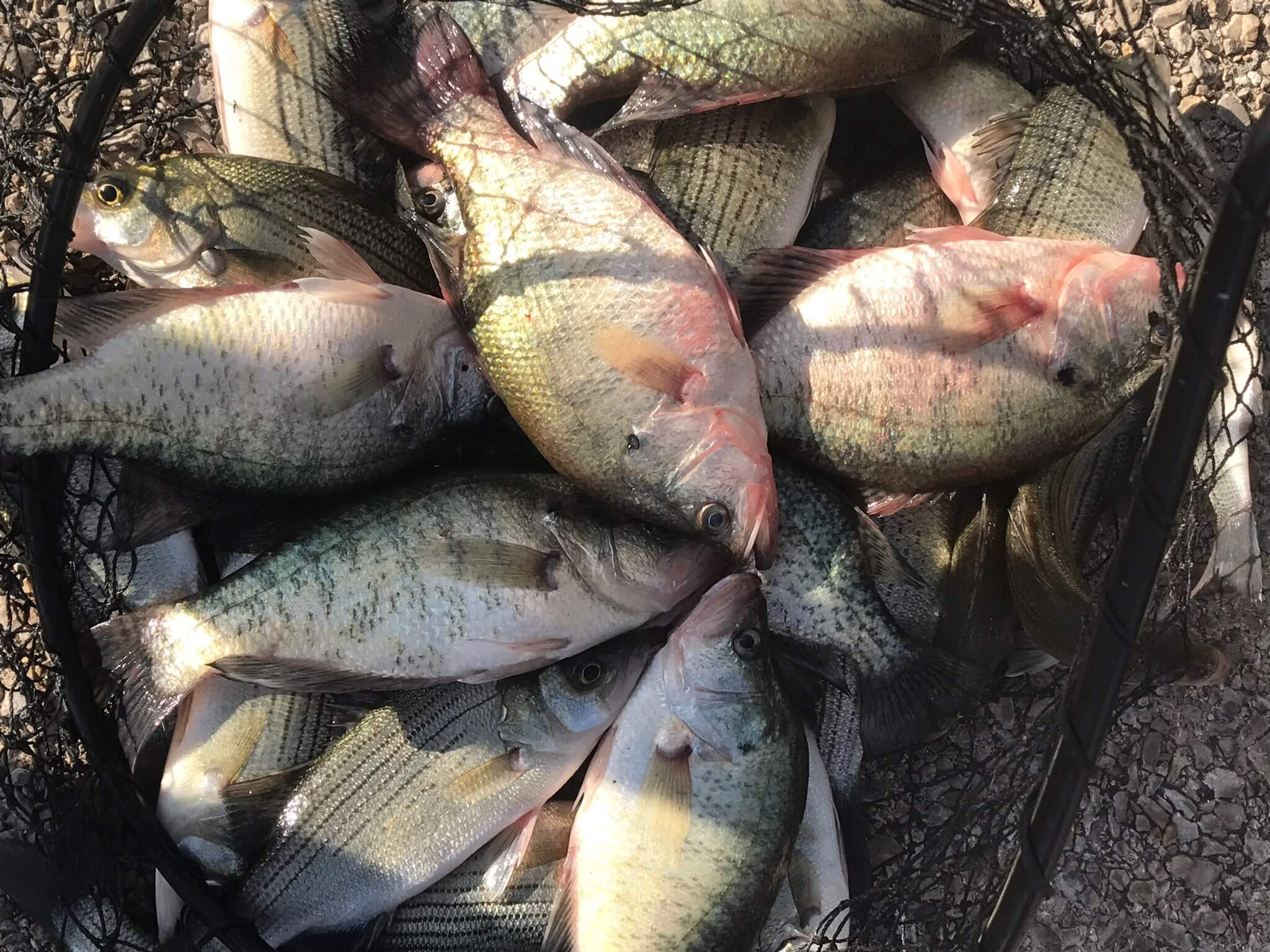 Lake Grapevine Crappie Guide