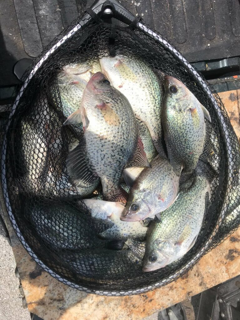 Lake Lewisville Summer Crappie